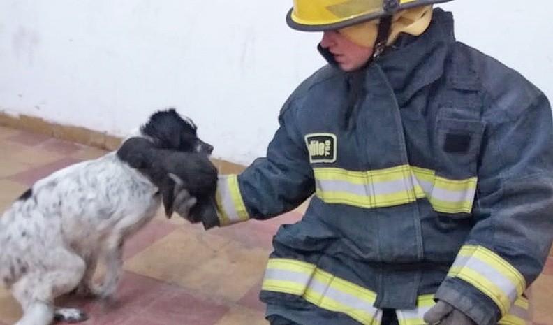 Bomberos rescataron cuatro perros de un pozo de 6 metros