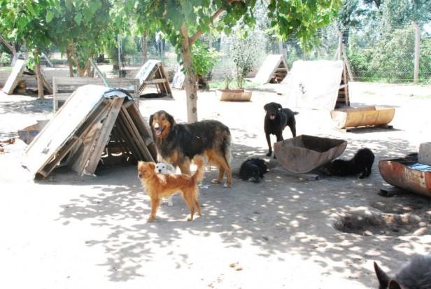 Robaron en la perrera municipal