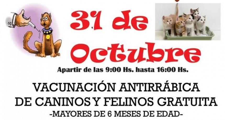 Se viene una nueva campaña de vacunación contra la rabia para perros y gatos.